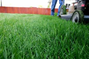 Lawn mower mowing at proper height for best lawn